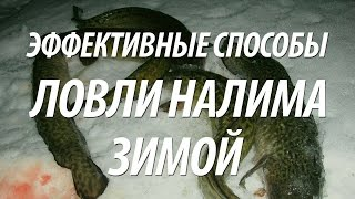 РЫБА НАЛИМ ЗИМОЙ - КАК ПОЙМАТЬ НАЛИМА НА ЗИМНЕЙ РЫБАЛКЕ(Как поймать рыбу налим на зимней рыбалке, узнайте из видео. Методы ловли налима на живца зимней жерлицей,..., 2015-12-21T16:27:08.000Z)