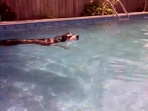 Smart dog cooling off on a 114 degree day!
