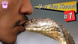 Did You Know? 20 Amazing Facts #1 - SlappedHamTV
