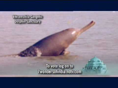 7 Wonders of India: Vikramshila Gangetic Dolphin Sanctuary