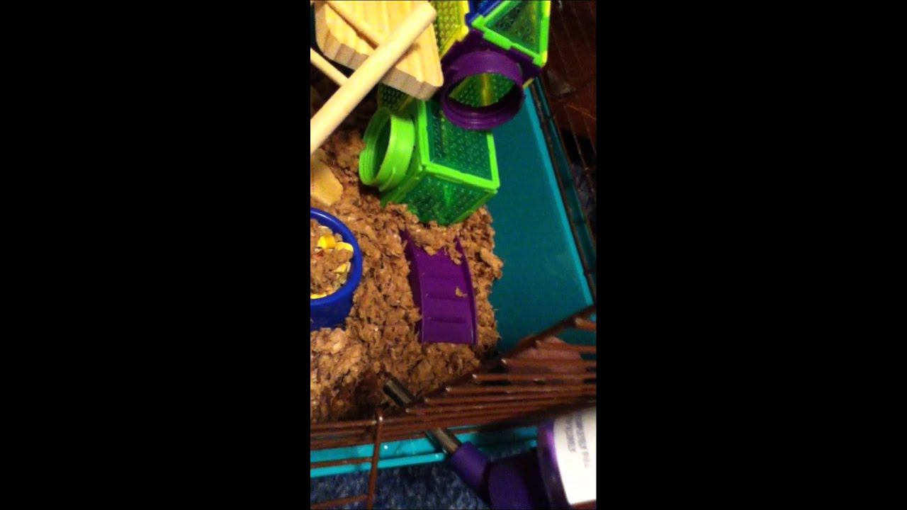 Hamster Cage Tours Youtube