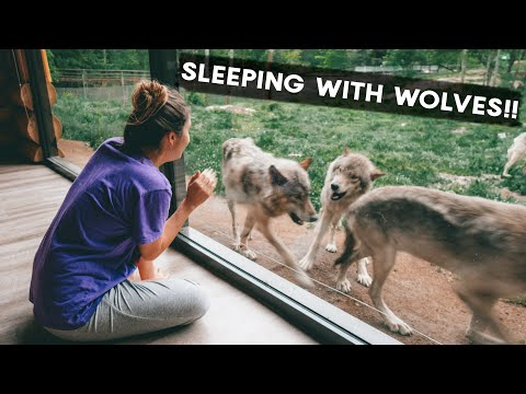 OTTAWA in the SUMMER | the BEST things to DO! | Sleeping with Wolves at Parc Omega