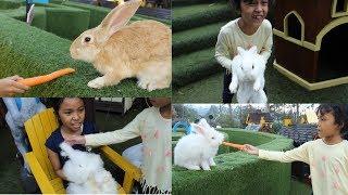 YUK KASIH MAKAN KELINCI DAN BERMAIN DI TAMAN KELINCI ♥ Feed The Rabbit   Learn Animal for kids