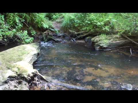 An exhale in nature - Beverly Beach creek
