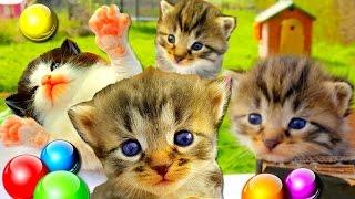 Маленькие котята подросли💖Брошенные котята в новом доме🏯Наши КОШКИ и КОТЫ😻Смешные коты и котята🎀