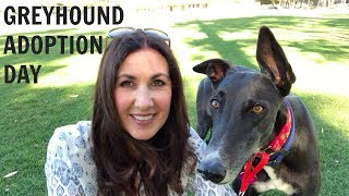 Greyhound Adoption Day