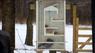 Squirrel Feeder Maze Upload2.wmv