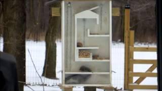 Squirrel Feeder Maze Upload2.wmv