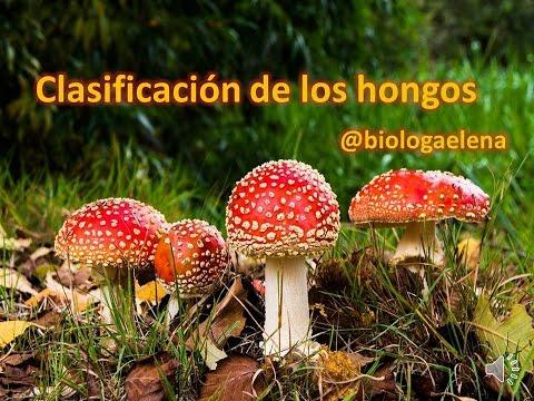 Clasificación de los hongos - Diversidad del reino Fungi