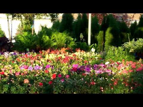 Advance Garden Center Landscape