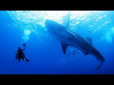 Go Sidemount | The Whale Sharks of Oslob