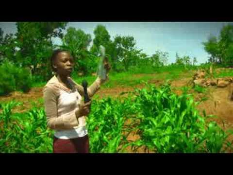Organic Farming in Western Province - Kenya
