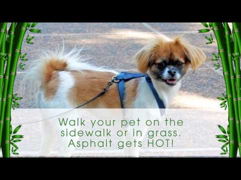 Summer Pet Safety Tips from Island Animal Hospital