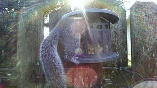 Squirrel nut bin - episode 2