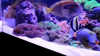 REEF TANK ADDICTION Season 2 Episode 7 ( fish - coral food and testing and more )