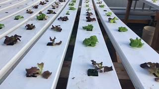 S2E1 Starting over with hydroponics system