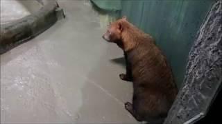 Кустарниковые собачки и рыбы . 02.01.18г.