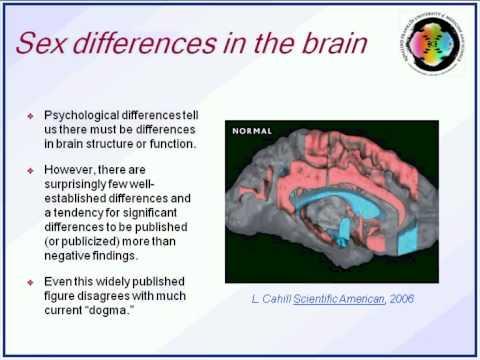 Pink Brain Blue Brain