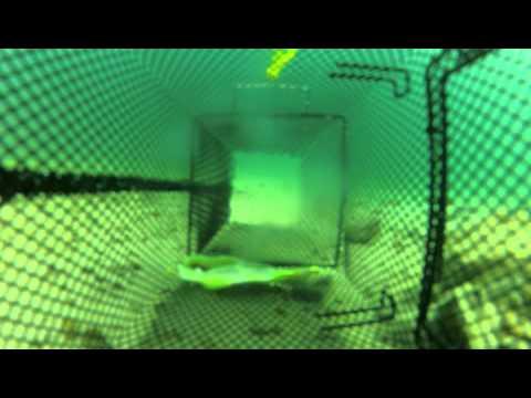 GoPro Crawfish Trapping 2013
