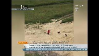 Отбиваться камнями и убегать: в Солнечном участились нападения бродячих собак на людей