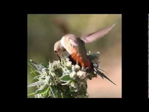 Best of Ganja Reggae Mix 2014