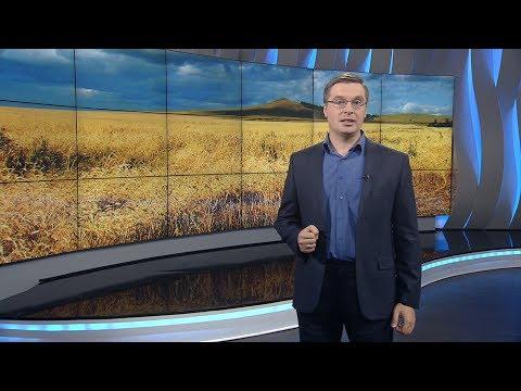 Россия на мировом рынке пшеницы
