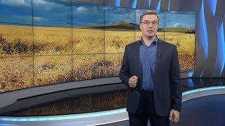 видео Экспорт сахара из Украины упал на треть