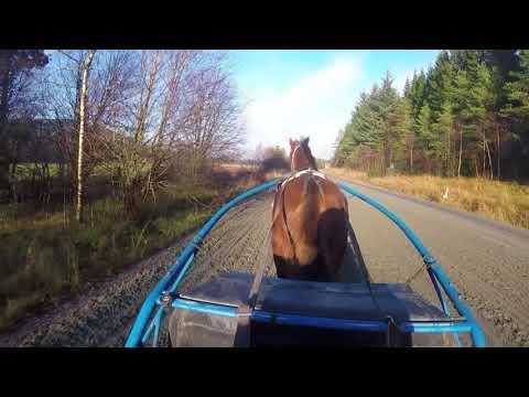 Hestesport, Åsane Folkehøgskole