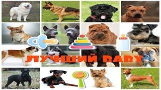 Выставка собак 2016, Лучший baby финал конкурса. Ваша любимая порода собак?