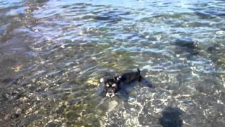 はじめ波に右往左往していたのに、突然飛び込んでしまいました。 ミニチ...