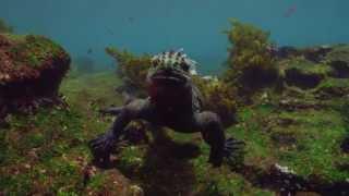 Galapagos 3D: Nature