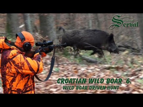 Wild Boar Hunting in Croatia - New season 2017.- Driven hunt in Viroviticka Bilogora