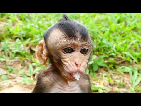 Top cute baby monkey in the world! Cute Bela hungry so much, Baby monkey ask me some fruit