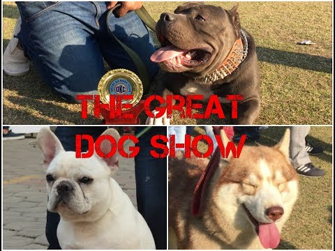 The Great DOG SHOW part-2 | Wildly Indian