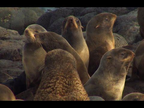 Nature Beauty Moment - St Paul Island, Alaska