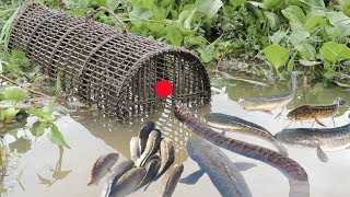 We Survival - Catching Fish With Primitive Bamboo Fish Trap