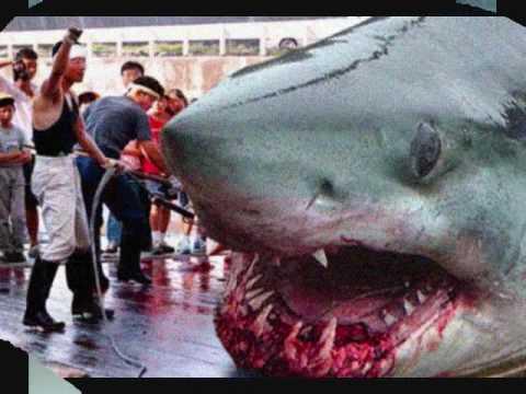 The Megalodon Shark - YouTube