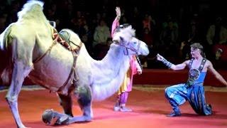 видео Московский цирк Никулина на Цветном бульваре