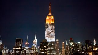 Video Endangered Species Light Up the Empire State Building download MP3, 3GP, MP4, WEBM, AVI, FLV November 2017