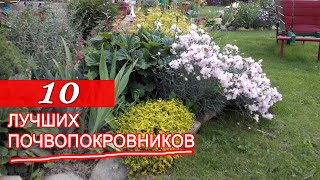 10 ЛУЧШИХ ПОЧВОПОКРОВНИКОВ из СЕМЯН!  Многолетние ПОЧВОПОКРОВНЫЕ растения  для АЛЬПИЙСКОЙ ГОРКИ.