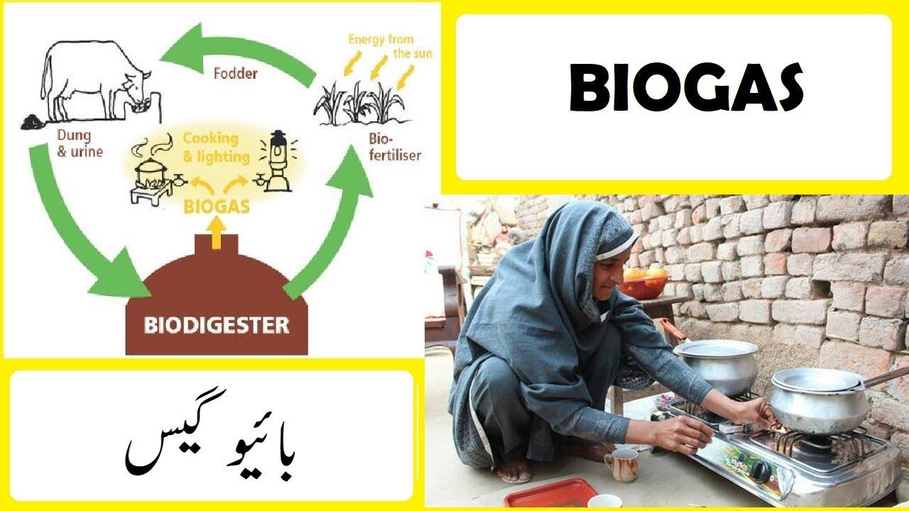 BioGas plants explained in Urdu / Hindi