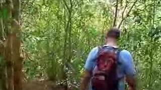 Bring the Bug Spray to Maunawili Falls
