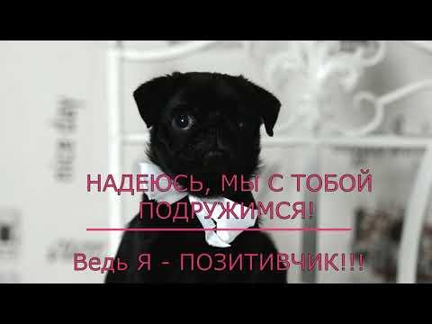 Русский Джекпот Тотал Пауэр