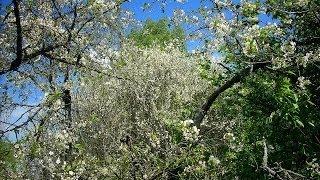 Antonio Vivaldi: Cztery Pory Roku - Wiosna / The Four Seasons - Spring (ver. 2)