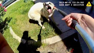 Animal Control Officer Catches Aggressive Great Pyrenees