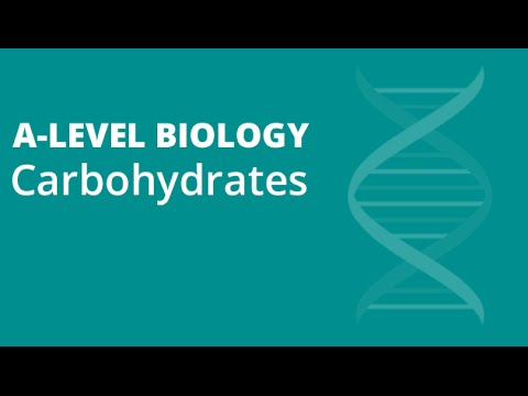 Polysaccharides: Starch, Glycogen & Cellulose | A-level Biology | OCR, AQA, Edexcel