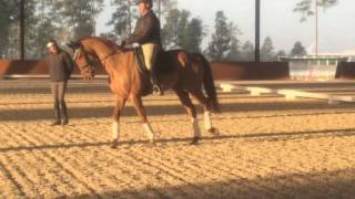 Blackfoot Mystery Dressage Training David O