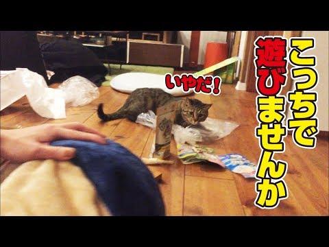 猫福袋を包むビニール袋が楽しいエコな猫さん!