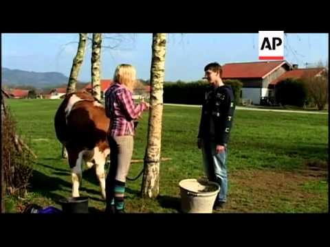 A 15-year-old German girl could not have a horse, so she trained one of her family's cows to become
