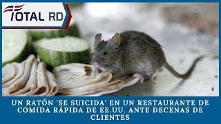 Un ratón 'se suicida' en un restaurante de comida rápida de EE.UU. ante decenas de clientes
